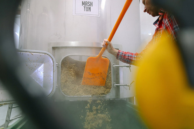 using a plastic spade to scoop out the spent grain from the mash tun
