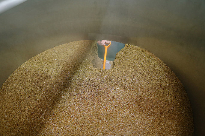 looking down inside a mash tun with spent grain inside